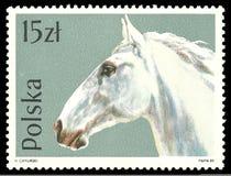 Cavalli, Lippizan, caballus di ferus di equus Fotografie Stock