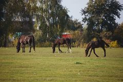 Cavalli in natura il giorno caldo soleggiato fotografia stock libera da diritti