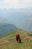 Cavalli nei prati Alatau trans--Ili Immagini Stock