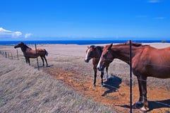 Cavalli nel campo Immagine Stock Libera da Diritti