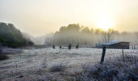 Cavalli nel loro recinto per bestiame su una mattina gelida di novembre Fotografie Stock