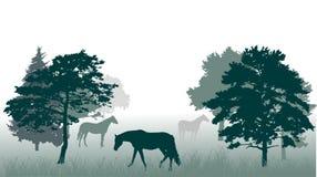 Cavalli nell'illustrazione della foresta illustrazione vettoriale