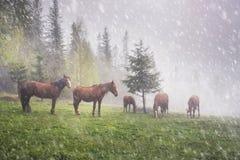 Cavalli nella nebbia all'alba fotografie stock libere da diritti
