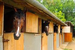 Cavalli nella scuderia Immagini Stock Libere da Diritti