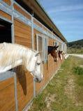 Cavalli nella stalla immagine stock