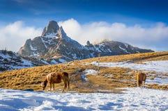 Cavalli nelle montagne Fotografia Stock