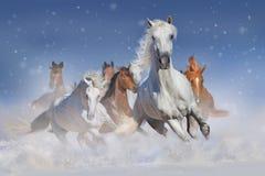 cavalli in neve Immagine Stock