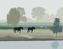 Cavalli in Olanda Immagine Stock Libera da Diritti