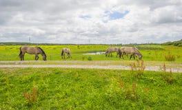 Cavalli selvaggi in un campo con i fiori selvaggi di estate Fotografia Stock Libera da Diritti