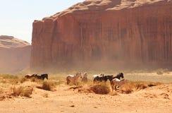 Cavalli selvaggii Immagini Stock