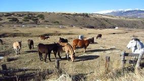 Cavalli selvaggii video d archivio