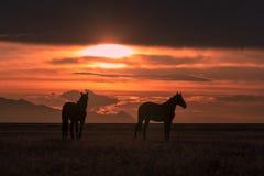 Cavalli selvaggii al tramonto nel deserto dell'Utah immagine stock