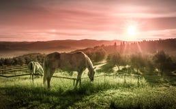 Cavalli selvaggii ed alba toscana Fotografia Stock Libera da Diritti