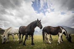 Cavalli selvaggii - HDR Fotografia Stock Libera da Diritti