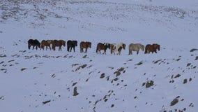 Cavalli selvaggii nell'isola Fotografia Stock Libera da Diritti