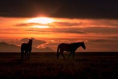 Cavalli selvaggii profilati al tramonto immagine stock libera da diritti