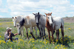 Cavalli spagnoli del mustang con il fotografo immagini stock
