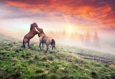 Cavalli, stalloni nella nebbia Fotografia Stock Libera da Diritti