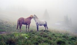 Cavalli, stalloni nella nebbia Fotografie Stock Libere da Diritti