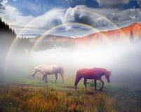 Cavalli, stalloni nella nebbia Immagini Stock Libere da Diritti