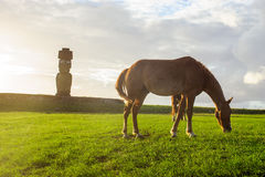 Cavalli su Isla de Pascua Rapa Nui pasqua Immagini Stock