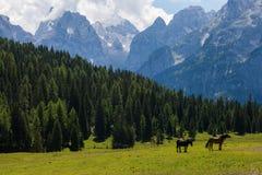 Cavalli su un campo Fotografia Stock