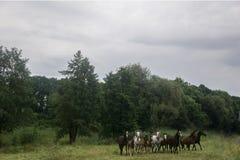 Cavalli su un campo Fotografie Stock