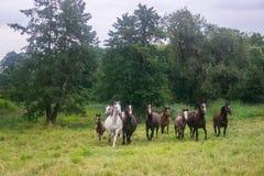 Cavalli su un campo Immagine Stock Libera da Diritti