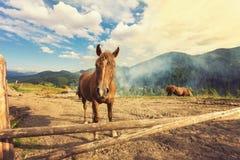 Cavalli su un pascolo Fotografia Stock