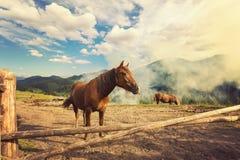 Cavalli su un pascolo Fotografia Stock Libera da Diritti