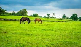 Cavalli su un pascolo nel Kentucky fotografia stock libera da diritti