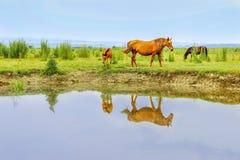 Cavalli su un prato in acqua Fotografia Stock Libera da Diritti