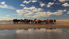 Cavalli su una spiaggia sabbiosa stock footage