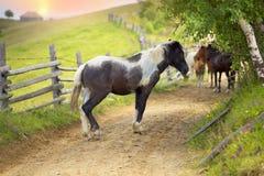 Cavalli su una strada campestre Immagine Stock Libera da Diritti