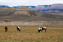 Cavalli sul campo Fotografie Stock Libere da Diritti
