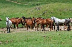 Cavalli sul glade del moutain fotografia stock
