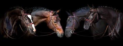 Cavalli sul nero immagini stock libere da diritti