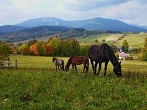Cavalli sul pascolo immagini stock libere da diritti