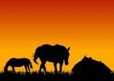 Cavalli sul pascolo al tramonto vicino alla scuderia Immagine Stock Libera da Diritti