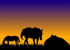 Cavalli sul pascolo al tramonto vicino alla scuderia Immagini Stock Libere da Diritti