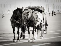 Cavalli sul quadrato del palazzo Fotografia Stock