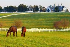 Cavalli sull'azienda agricola Fotografie Stock