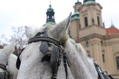 Cavalli sulle vie di Praga fotografie stock
