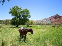 Cavalli in Tupiza, Bolivia Immagine Stock