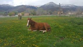 Cavalli in un campo Immagine Stock Libera da Diritti