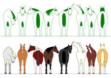 Cavalli variopinti in una fila Fotografia Stock Libera da Diritti