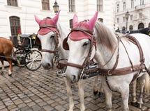 Cavalli a Vienna Austria Fotografie Stock Libere da Diritti