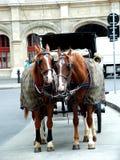 Cavalli in ViennaII Fotografia Stock Libera da Diritti