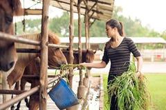 Cavallini d'alimentazione Immagine Stock Libera da Diritti