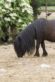 Cavallino del cavallo nell'azienda agricola Immagine Stock